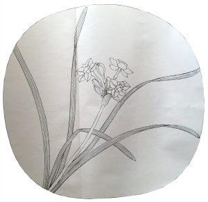 Narcissus Sketch