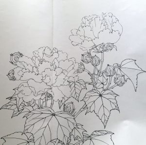 Red Cottonrose Sketch