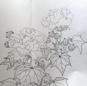 Red Cottonrose Sketch