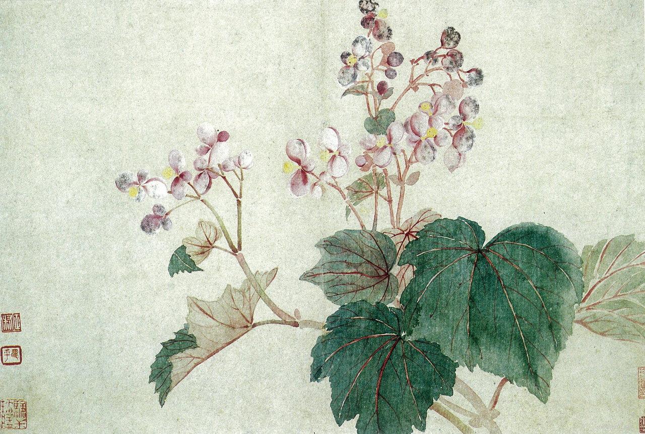 秋海棠图页-花卉山水册之六