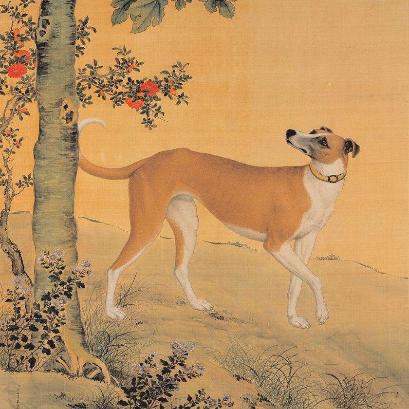 dog-lang-shi-ning-sq