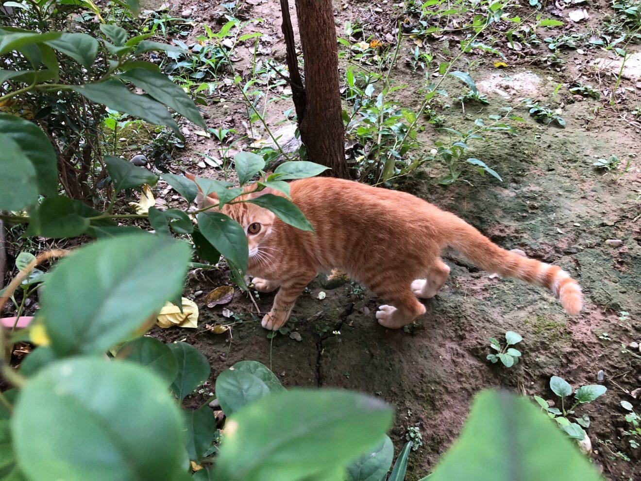 Kitten colleague